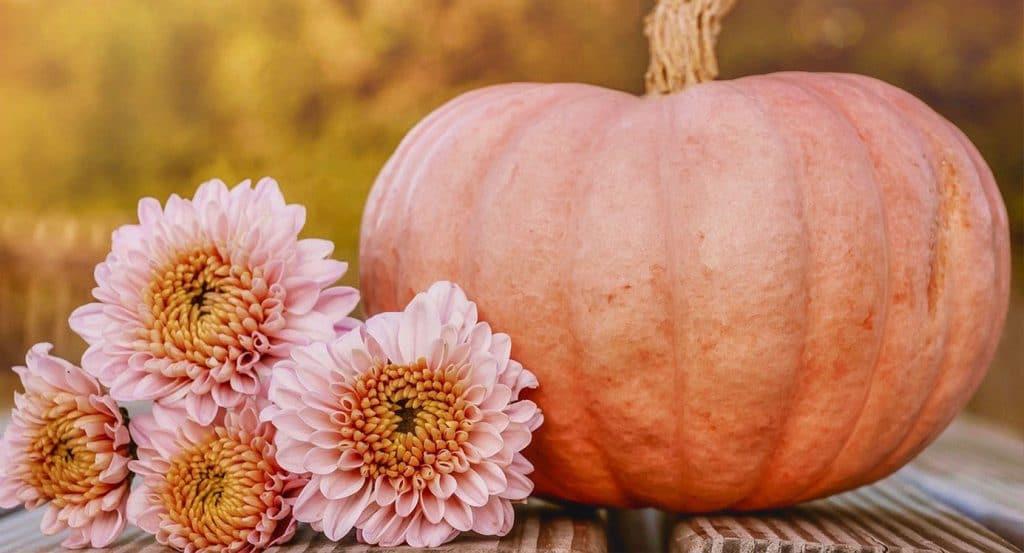 Les bienfaits de l'automne 4