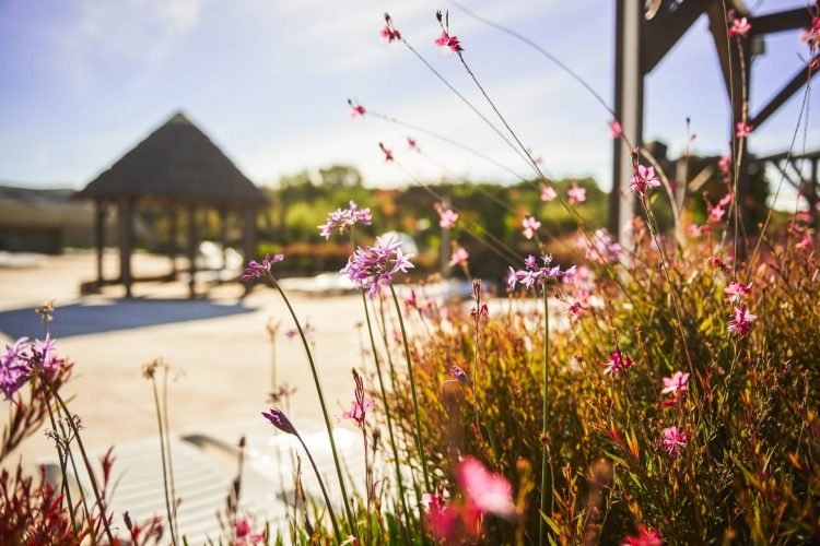 fleurs rose paillotte nature
